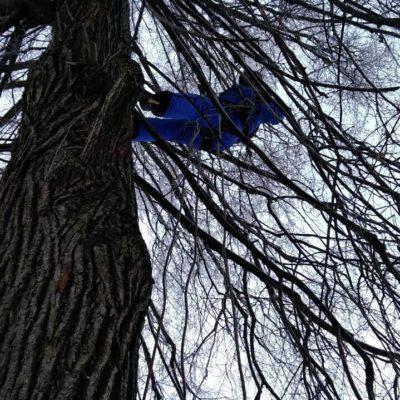 Пилка деревьев и веток Белгород