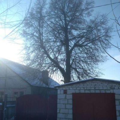 Валка деревьев в Белгороде