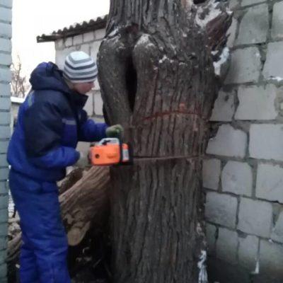 свалить дерево