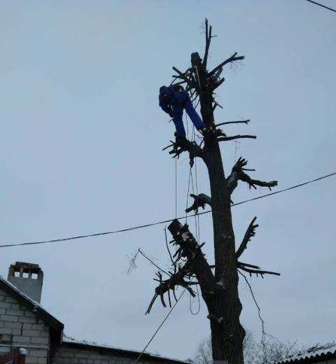 спилить дерево Белгород