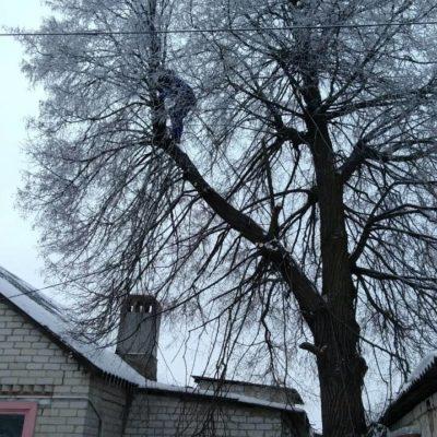 Спил дерева и веток Белгород