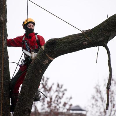спилить дерева и аккуратный спуск Дерева