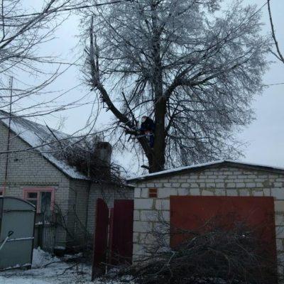 Спил веток Белгород