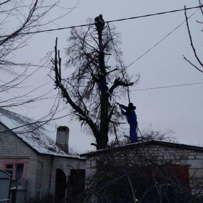 Пилка деревьев Белгород