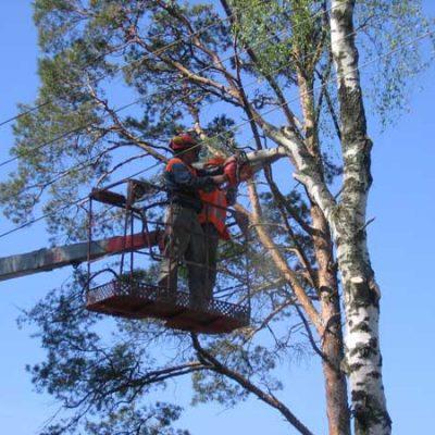 Пилка деревьев с автовышки белгород