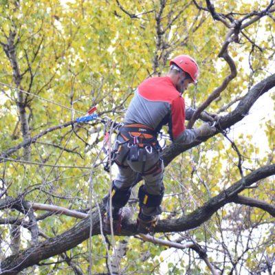 Пилка деревьев Белгородская область