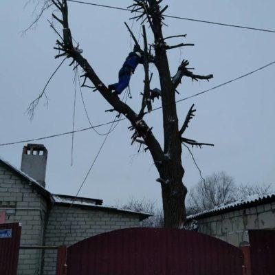 спилить дерево в Белгороде