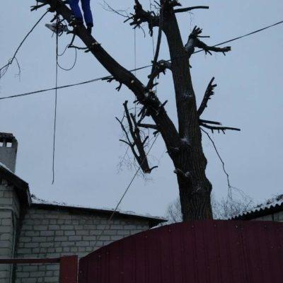 Спил деревьев Белгород