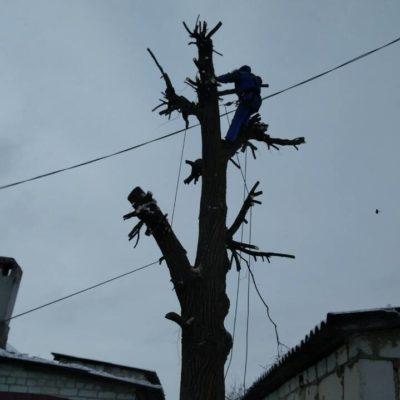 попилить дерево на части Белгород