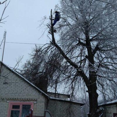 Спилить дерева белгород