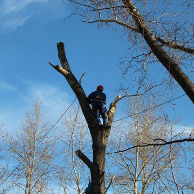 Спил деревьев в Белгороде