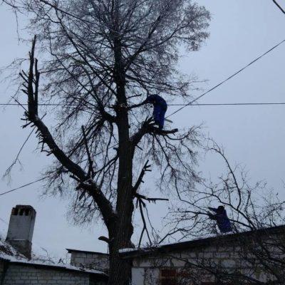 Пилка деревьев в Белгороде