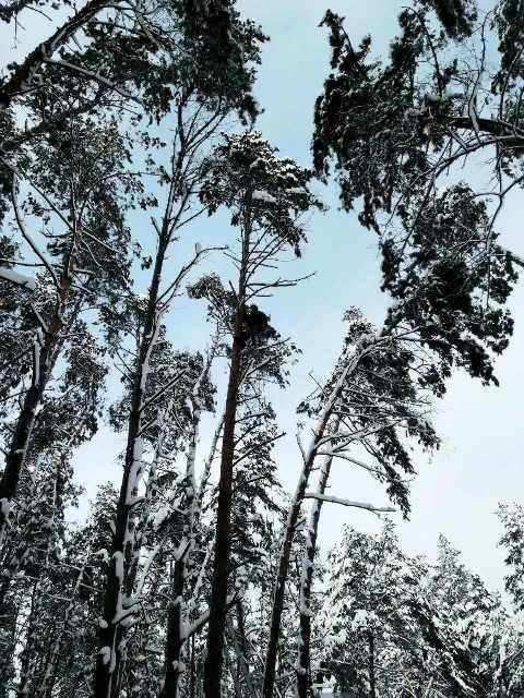 альпинисты пилят дерево